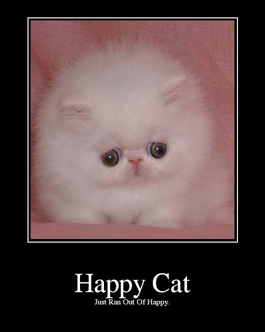 Happy cat picture ebaum s world