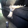 My Dog Drunk!