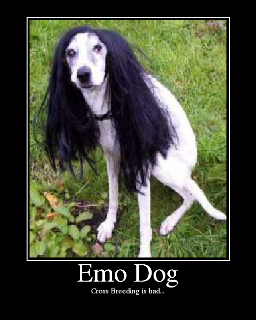 emo dog   picture ebaum s world