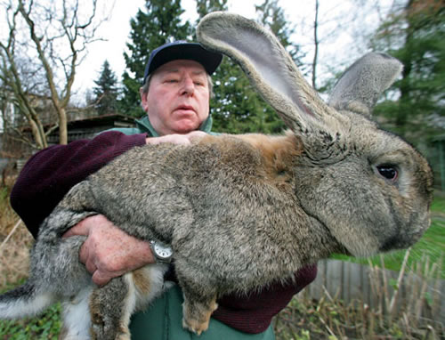 Big Rabbit Picture Ebaum S World