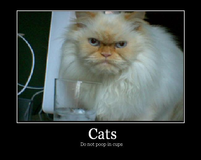 Cats demotivational poster