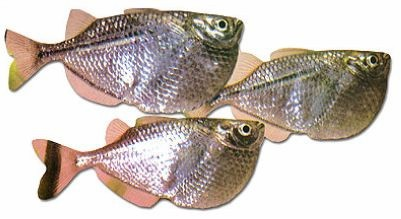 Rarest Fish - Gallery | eBaum's World