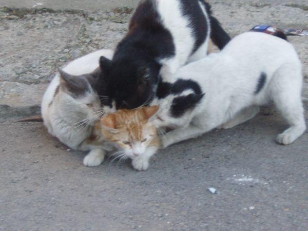 Cat Fight Bizarre Video 105