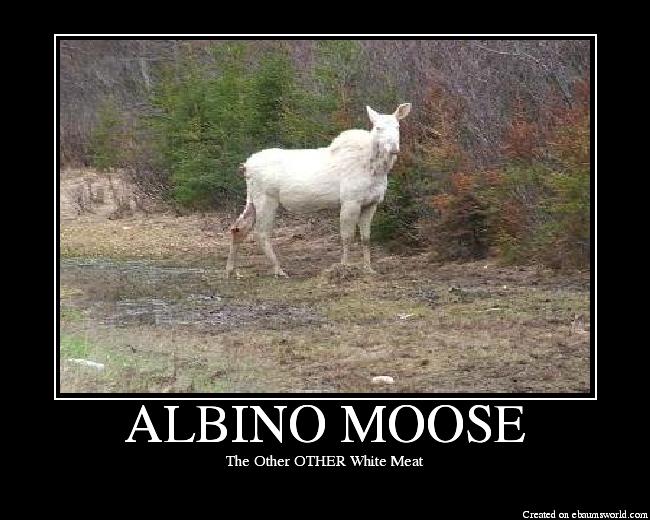 ALBINOMOOSE.png