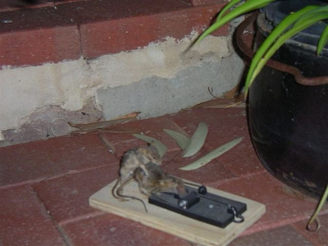 Speaking, would bad day mouse trap consider
