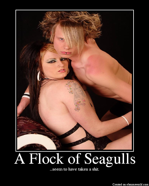 Flock of Seagulls - Picture eBaums World