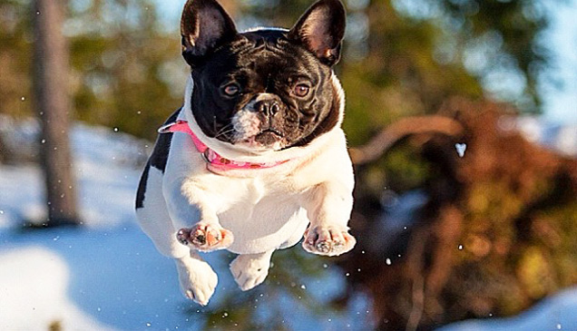 Dog Flips Over His New Ball Video Ebaum S World