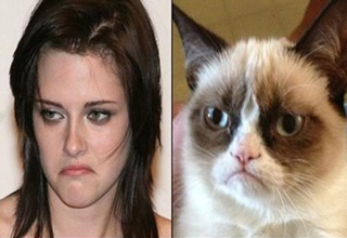 Best of grumpy cat