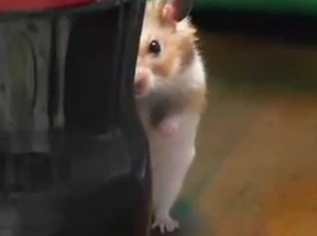 Hamster Spy Caught On Camera