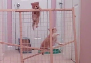 Kittens Bust Out Of Lockdown