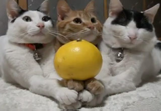 The Most Well Trained Cats Ever?