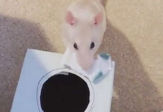 15 Cool Rat Tricks