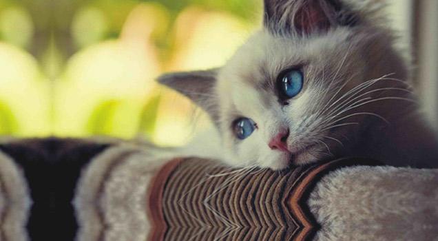 Sad Cat Diaries view on ebaumsworld.com tube online.