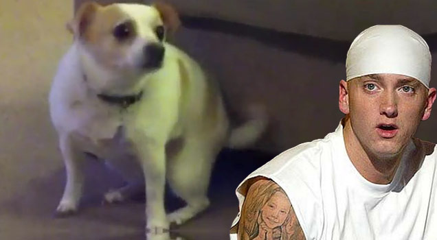 Dog Shakes Ass to Eminem Song Shake That view on ebaumsworld.com tube online.