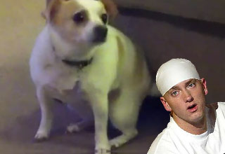 Dog Shakes Ass to Eminem Song