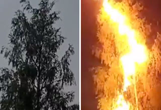 Lightning Strikes A Tree In Front Of Guy Filming