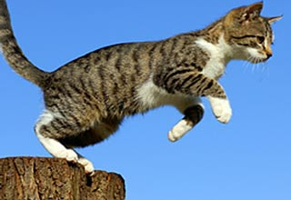how to make a cat jump