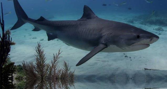 Shark Dreams: High-Speed Sharks view on ebaumsworld.com tube online.