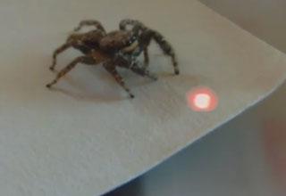 Spider Bite Infection Video Ebaum S World
