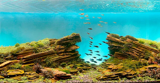 Fish tanks for the home - 15 Epically Awesome Fish Tanks That You Wont Believe Exist