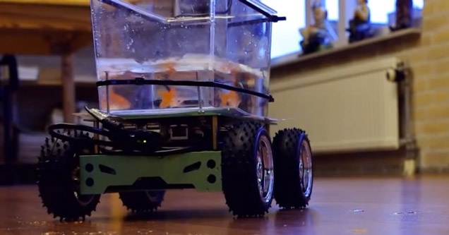 Watch A Fish Drive Its Own Electric Car Around The Room