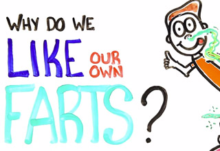 why do we like our farts