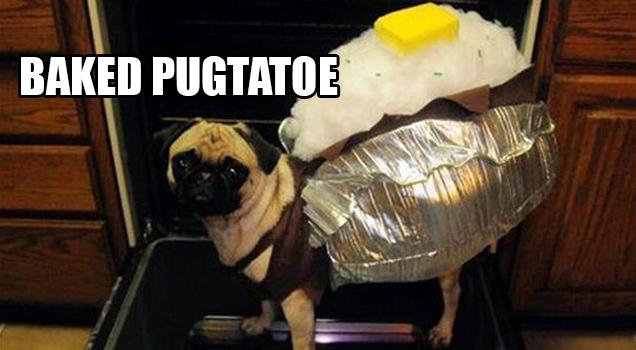 pug in baked potato costume