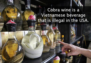 vietnamese cobra wine