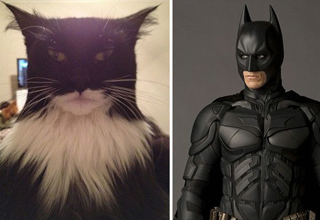 cat that looks like christian bale batman