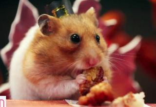 dwarf hamster eating a nut