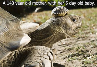140 year old turtle and bab