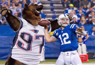 bear wearing patriots jersey sacks qb