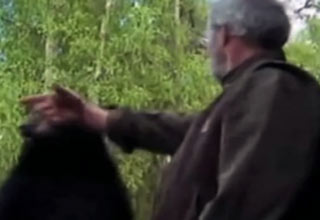 old man pimp slaps bear
