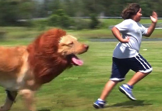 dog looks like a lion chases kid