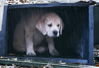 sad dog taking shelter from rain