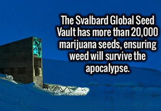 svalbard global seed vault contains 20,000 marijuana seeds