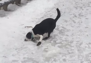 dog slipping on ice
