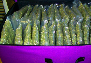 suitcase full of weed