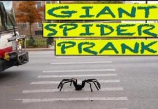 remote controlled giant spider in crosswalk