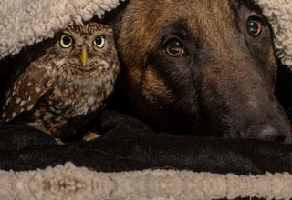 owl and dog cuddling under blanket