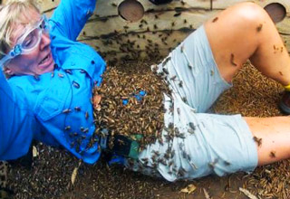 woman attacked by bee hive