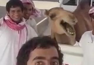 camel laughs with a group of guys