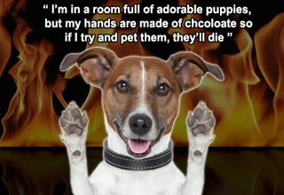 dog in front of flames text says im in a room full of puppies but my hands are made of chooclate so i can