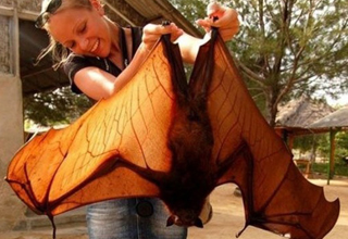 Hot girl holds a giant bat.
