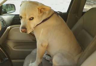 10 Photos Of Dogs Realizing They're Going To The Vet, Not The Park