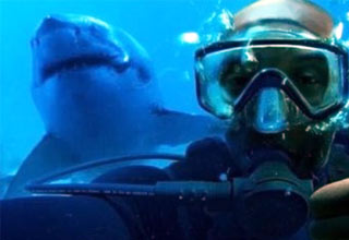 Shark sneaks up behind diver