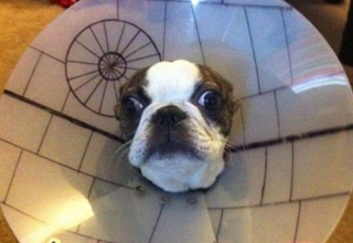 Dog wears cone decorated to look like the death star.