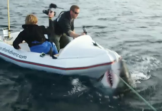 great whit shark attacking boat in