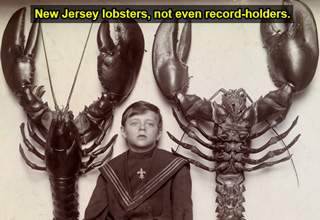 new jersey lobsters, not even record-holders