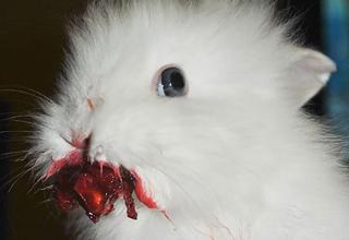 Animals Eating Berries Looks Horrific